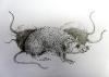 Žiurkės - tušas, pieštukas